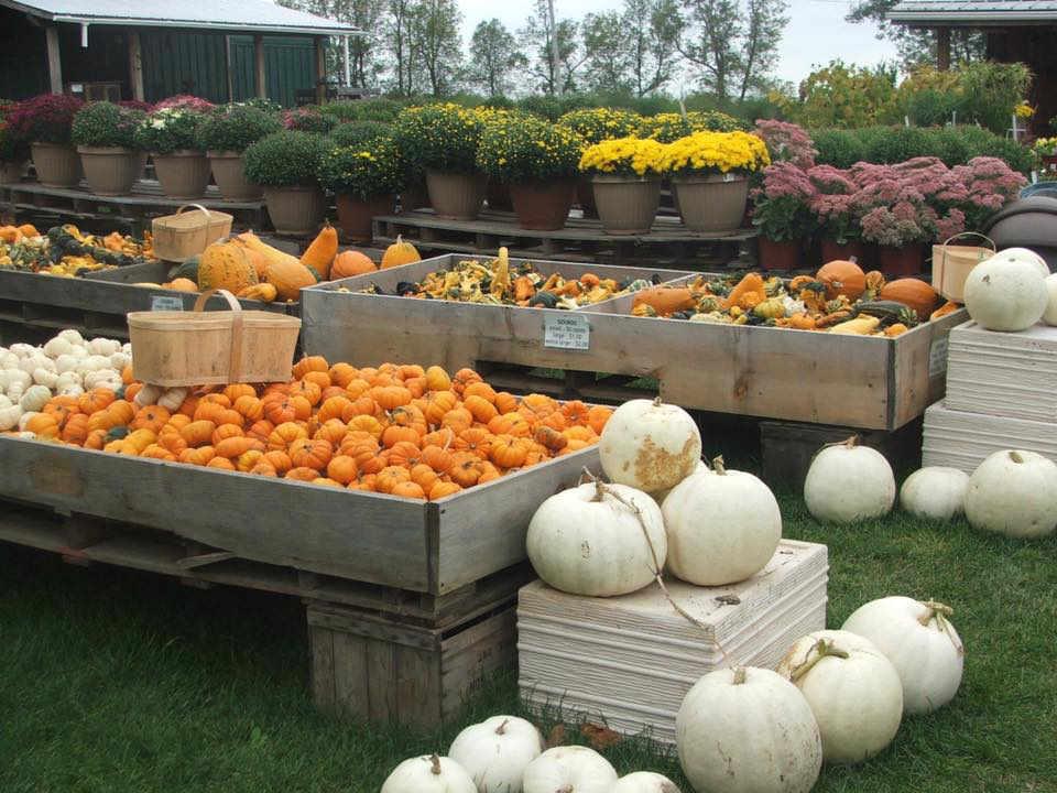 Marché de fruits et légumes citrouilles Millers Farm, Market & Garden Centre Ottawa Ontario Canada Ulocal produit local achat local