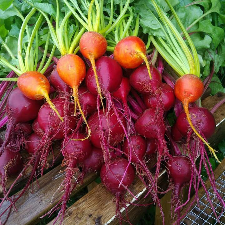 Family Farmer Beets Our Farm Ottawa Ontario Canada Ulocal Local Product Local Purchase