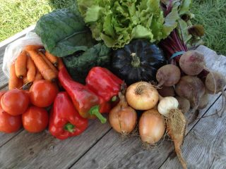 Fermier de famille légumes Our little Farm Thurso Québec Canada Ulocal produit local achat local