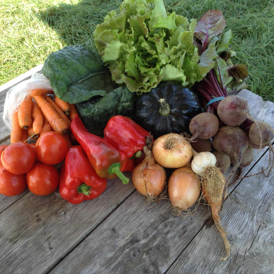 Family Farmer vegetables Our little Farm Thurso Quebec Canada Ulocal local product local purchase