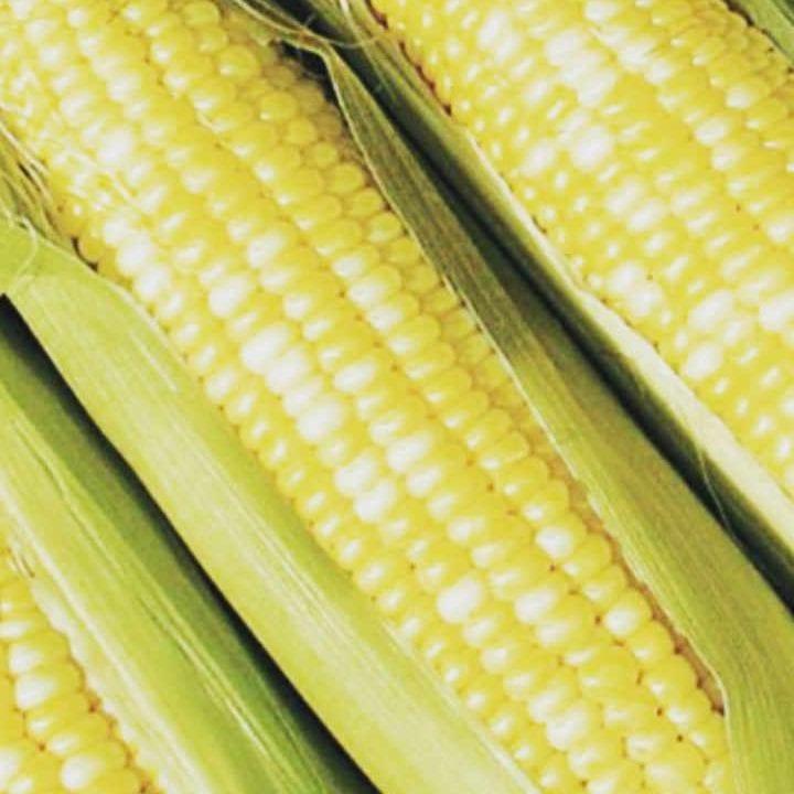Public Market Corn Perth Farmers' Market Perth Ontario Canada Ulocal Local Product Local Purchase