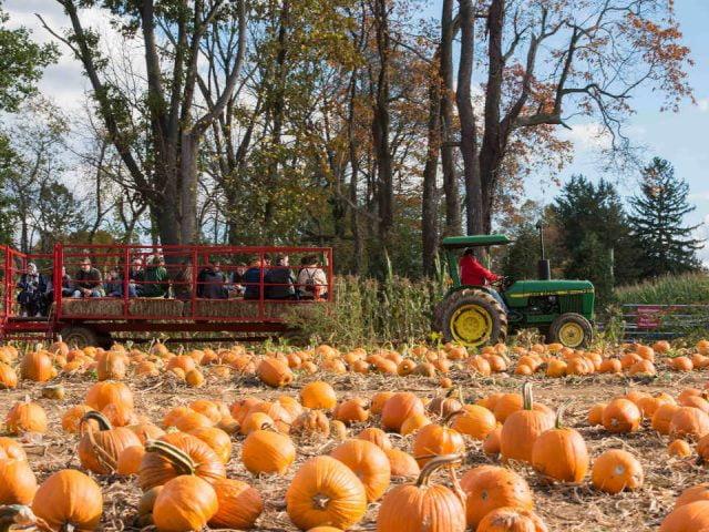Marché public citrouilles Stony Hill Farm Market Chester New Jersey États-Unis Ulocal produit local achat local