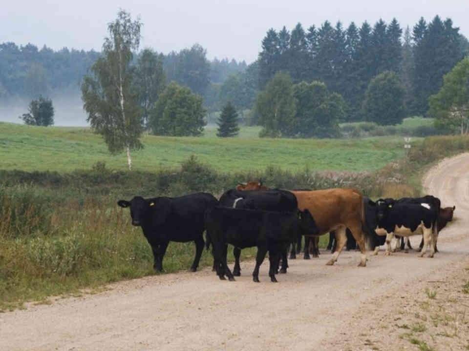 Vente de viandes biologiques Angus East Organics Whites Cove Nouveau-Brunswick Canada Ulocal produit terroir produit local achat local