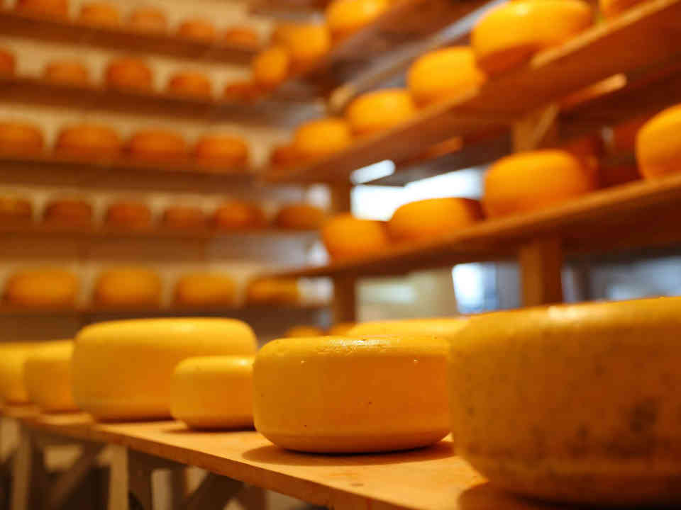 Cheese factory Armadale Farm Dairy Products Roachville New Brunswick Canada Ulocal product local produce local purchase local