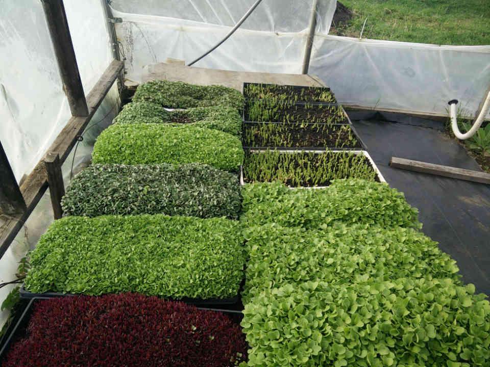 Ferme alimentation marché de fruits et légumes Bantry Bay Farm Bayside Nouveau-Brunswick Canada Ulocal produit terroir produit local achat local