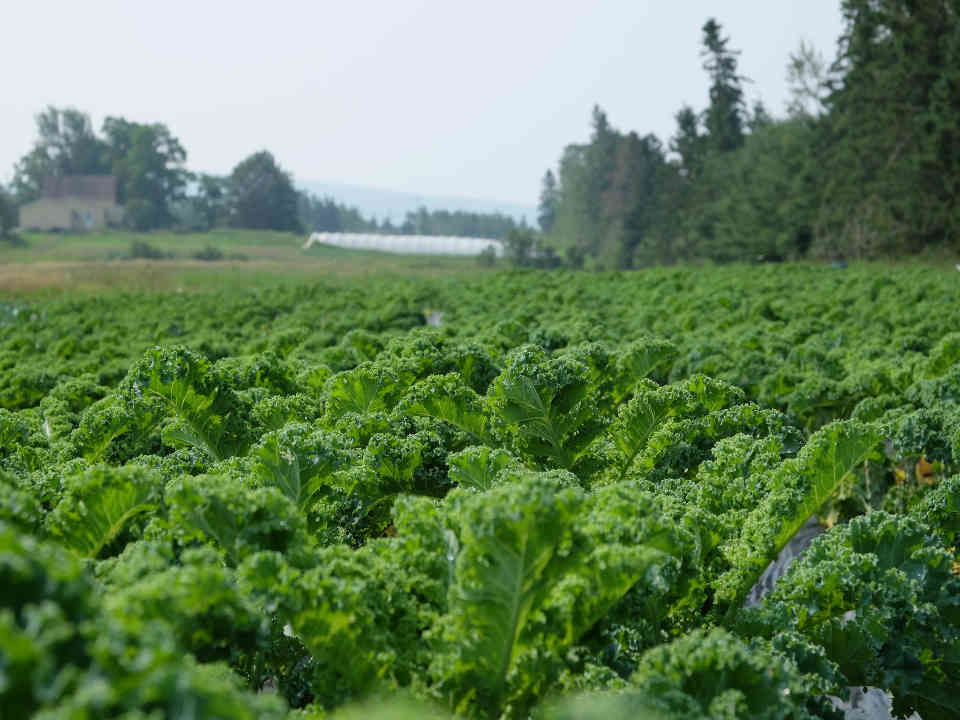 Fermiers de famille fruits et légumes Dave's Produce Packs Hampton NB Canada Ulocal produit local achat local produit terroir