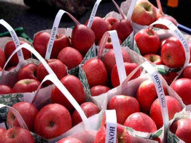 Autocueillette de pomme Dukeshire's Apples – Orchard Shade Farms Northampton Nouveau-Brunswick Ulocal produit local achat local