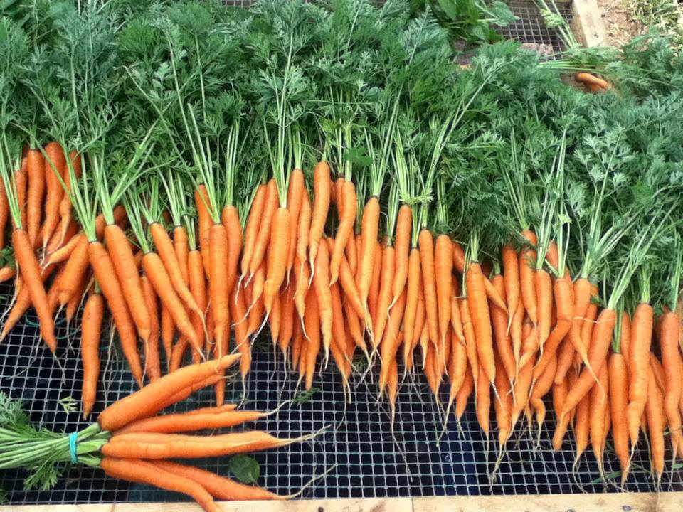 Organic Fruit and Vegetable Market Farm Alva Farm Saint-Maurice NB Canada Ulocal local product local purchase local product
