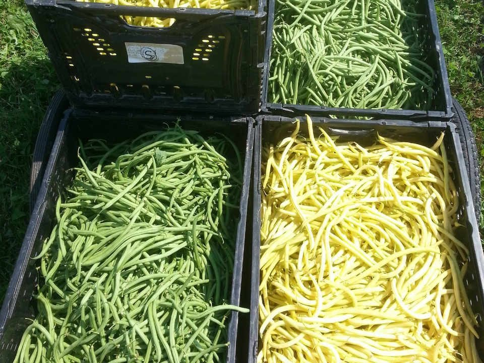 Fruits and Vegetables Tabusintac New Brunswick Ulocal Local Product Local Product Local Product