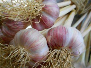 Ferme fruits et légumes bio Groovy Little Garden Shed Johnville NB Canada produit local achat local produit terroir