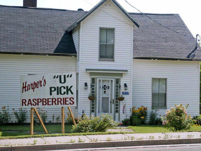 Autocueillette framboises miel Harper's Raspberry U-Pick Hillsborough NB Canada Ulocal produit local achat local produit terroir