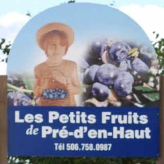 Autocueillette fraises fruits et légumes Les Petits Fruits de Pré d'en Haut Memramcook Nouveau-Brunswick achat local produit local