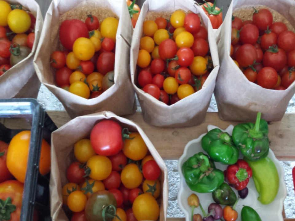 marché de fruits et légumes bio Les serres du semeur Saint-Basile NB Ulocal produit local achat local