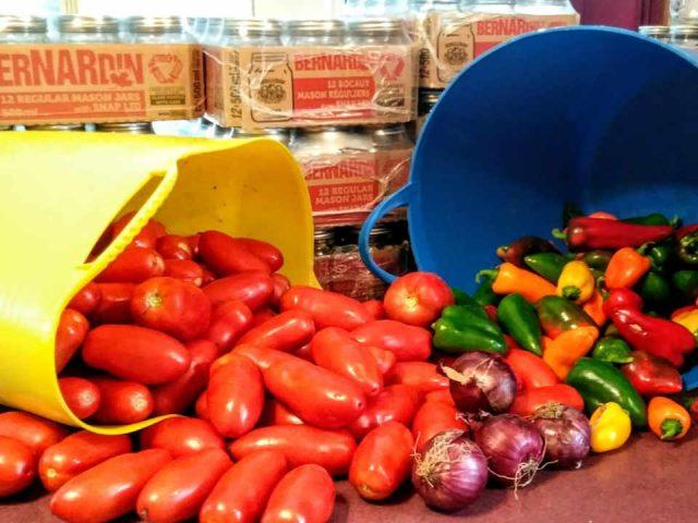 Marché de fruits et légumes écologiques Prince William Nouveau-Brunswick Ulocal produit local achat local