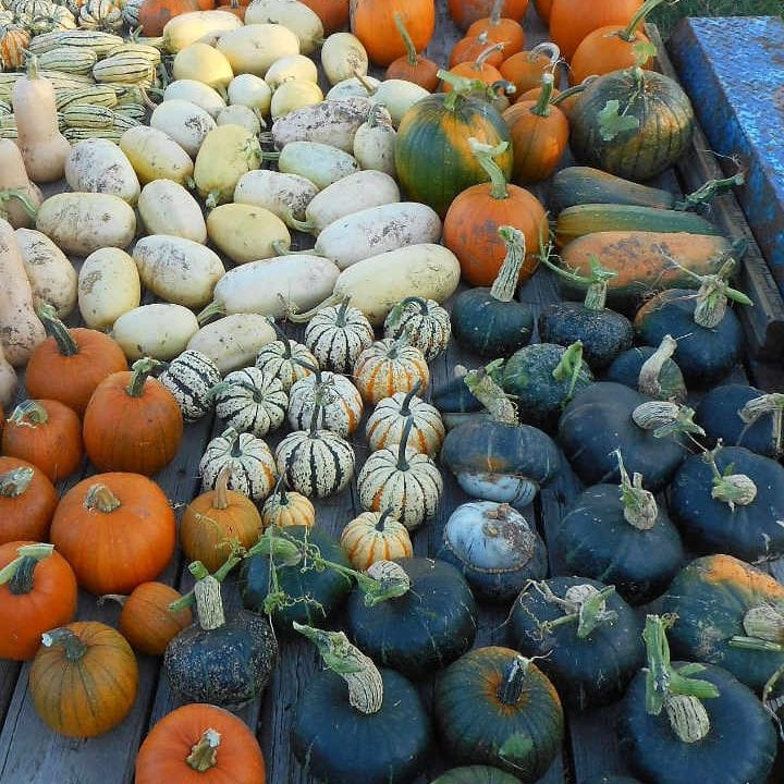 Sale of meat sqashes and pumpkin Moonlight Crofters Organic Farm Douglas Ontario Canada Ulocal Local Product Local Purchase