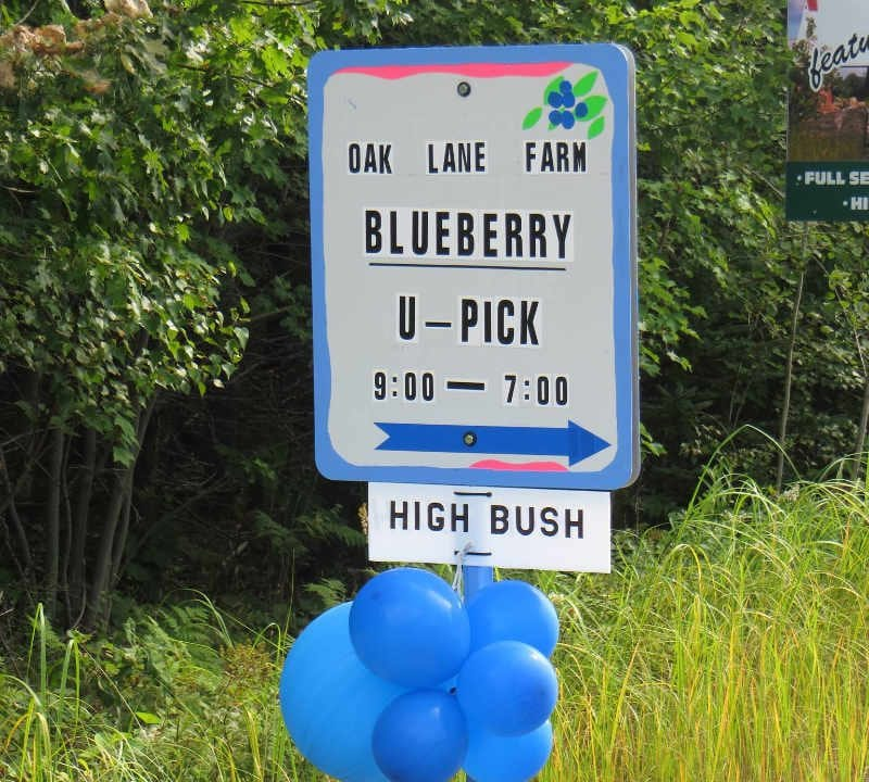 Pick-your-own blueberries Oak Lane Farm Oak Point New Brunswick Ulocal Local Product Local Purchase