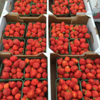 Fruit and Vegetable Market Raymond Young's Family Farm Jemseg New Brunswick Ulocal Local Product Local Purchase