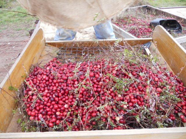 Ferme canneberges biologiques Springbrook Cranberry Inc Tracy Nouveau-Brunswick Ulocal produit local achat local produit terroir