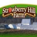 Family Farmers Feeding Meat and Organic Fruits and Vegetables Strawberry Hill Farm Pembroke New Brunswick Uocal Local Product Local Buying