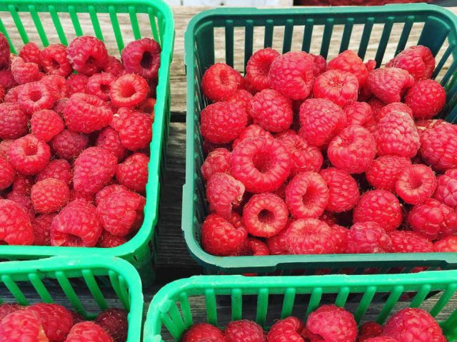 Produce Market Raspberries Rideau Pines Farm Ottawa Ontario Canada Ulocal Local Product Local Purchase