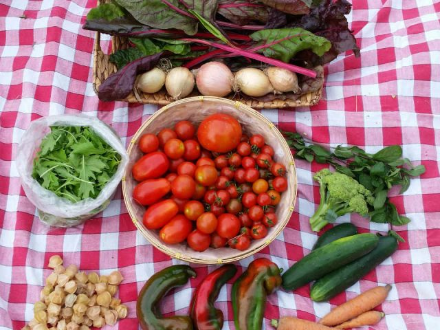 Family Farmer CSA Basket Root Radical CSA Gananoque Ontario Canada Ulocal Local Product Local Purchase