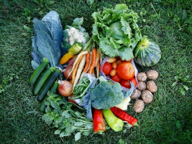 Family Farmer Basket CSA Roots and Shoots Farm Alcove Quebec Canada Ulocal Local Product Local Purchase