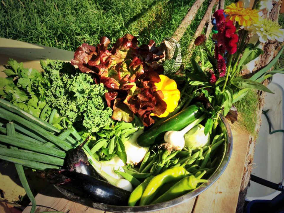 Marché de fruits et légumes panier légumes ASC Salt of the Earth Farm Kingston Ontario Canada Ulocal produit local achat local