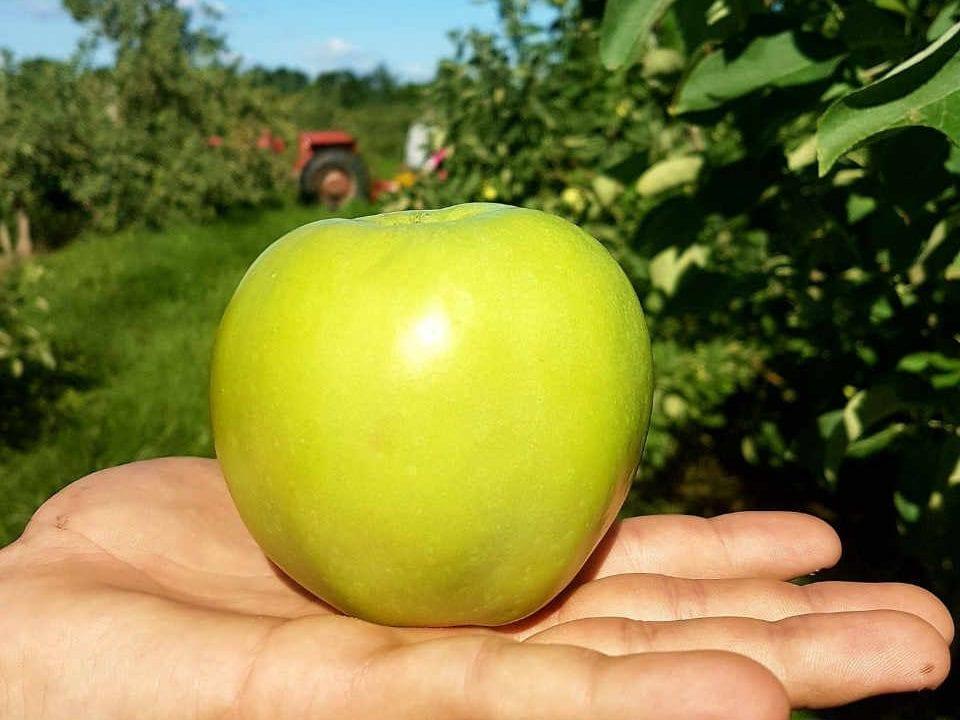 Marché de fruits et légumes pomme Smyth's Apple Orchard Iroquois Ontario Canada Ulocal produit local achat local