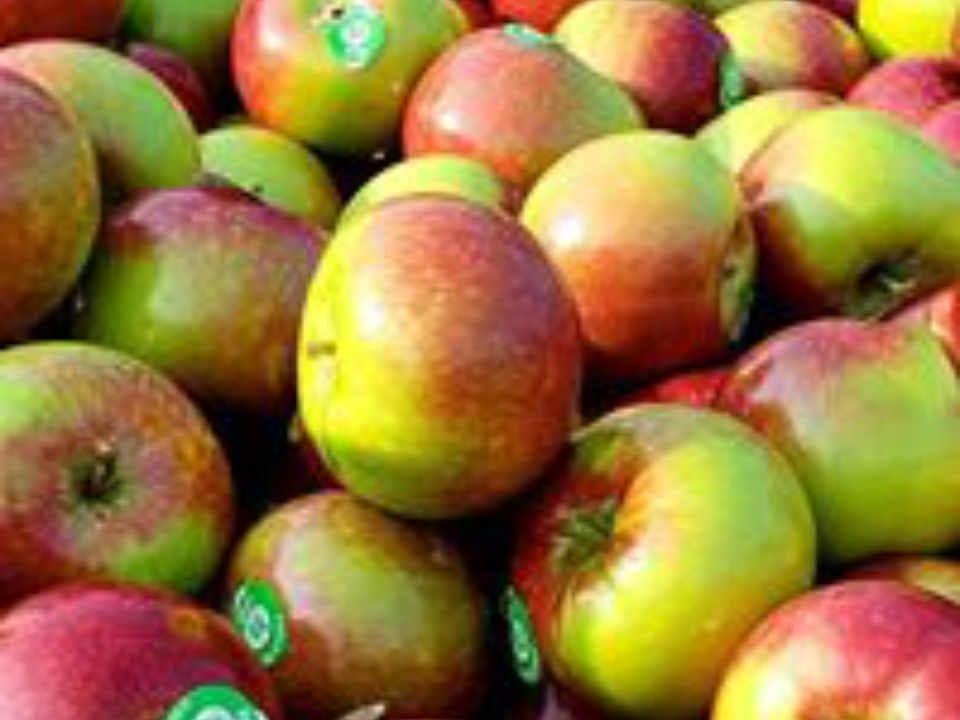 Marché de fruits et légumes pommes Smyth's Apple Orchard Iroquois Ontario Canada Ulocal produit local achat local