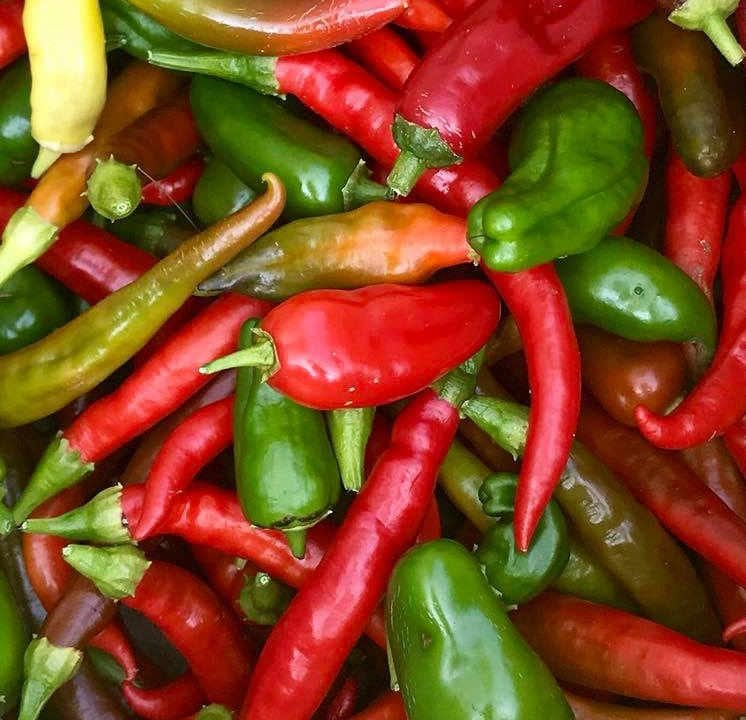 Family Farmer hot peppers Snapping Turtle Farm Cranbury Township New Jersey USA Ulocal Local Product Local Purchase