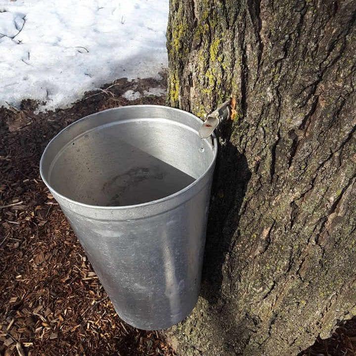 Cabane à sucre eau d'érable Stanley's Olde Maple Lane Farm Edwards Ontario Canada Ulocal produit local achat local