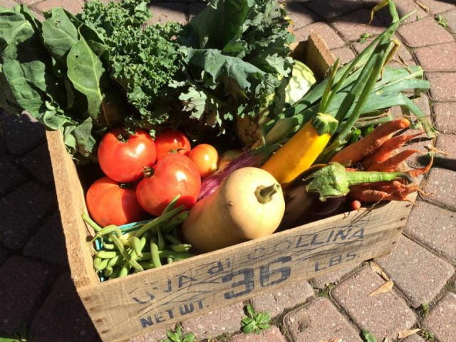 Family Farmer CSA Basket Terramor Farm Renfrew Ontario Canada Ulocal Local Product Local Purchase