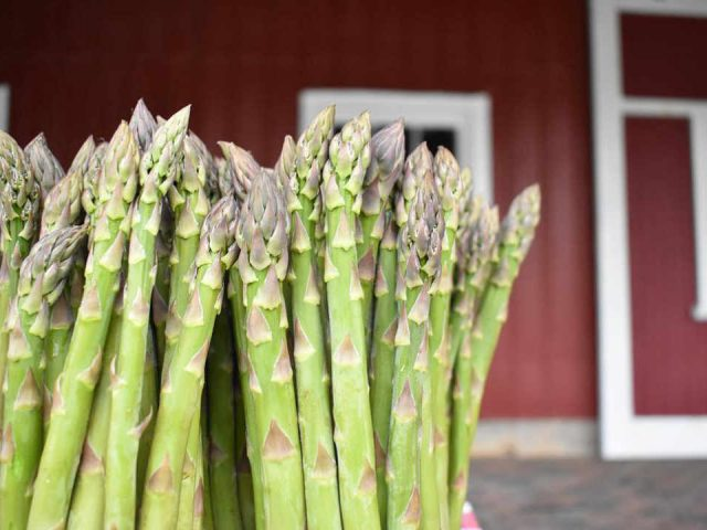 Produce market asparagus Tincap Berry Farm Brockville Ontario Canada Ulocal local product local purchase