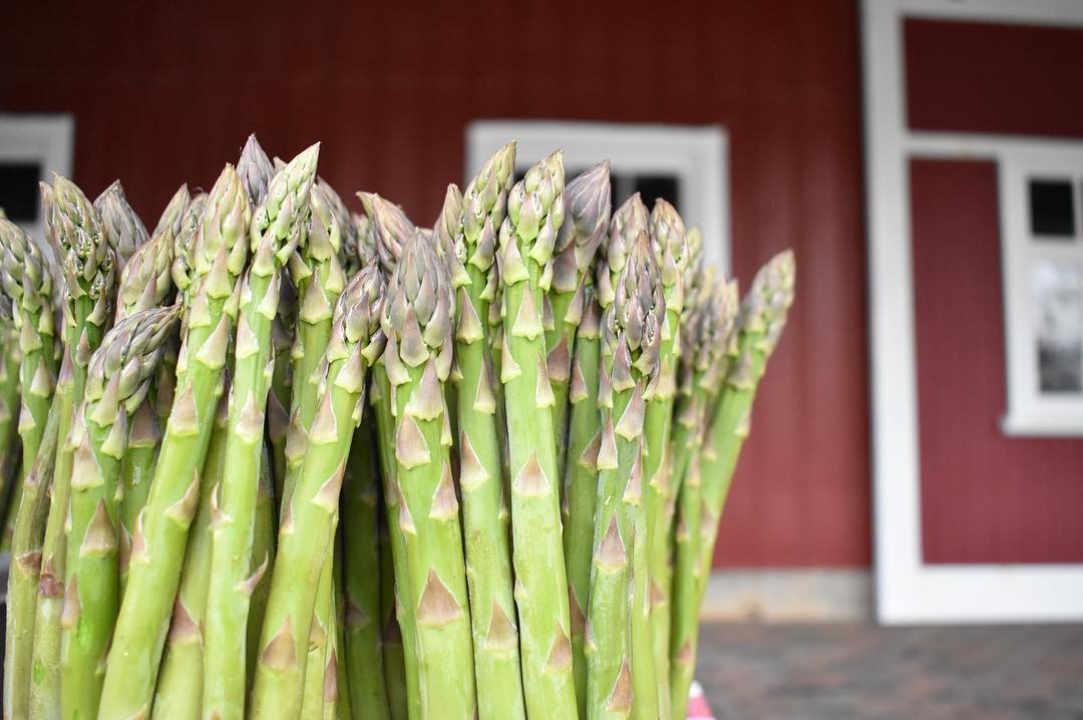 Marché de fruits et légumes asperges Tincap Berry Farm Brockville Ontario Canada Ulocal produit local achat local