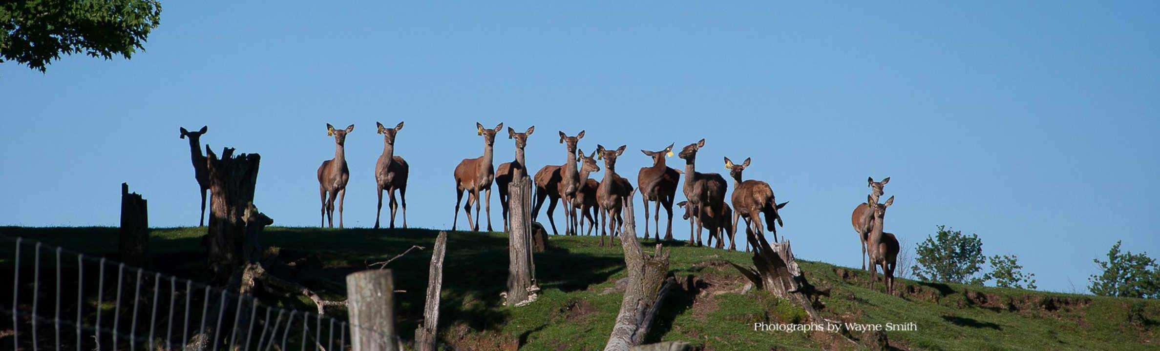 Vente de viande cerfs rouges Trillium Meadows Vankleek Hill Ontario Canada Ulocal produit local achat local