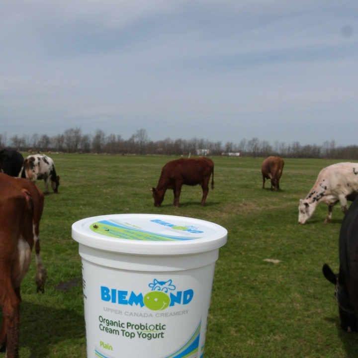 Fromagerie yogourt et vaches Upper Canada Creamery Iroquois Ontario Canada Ulocal produit local achat local