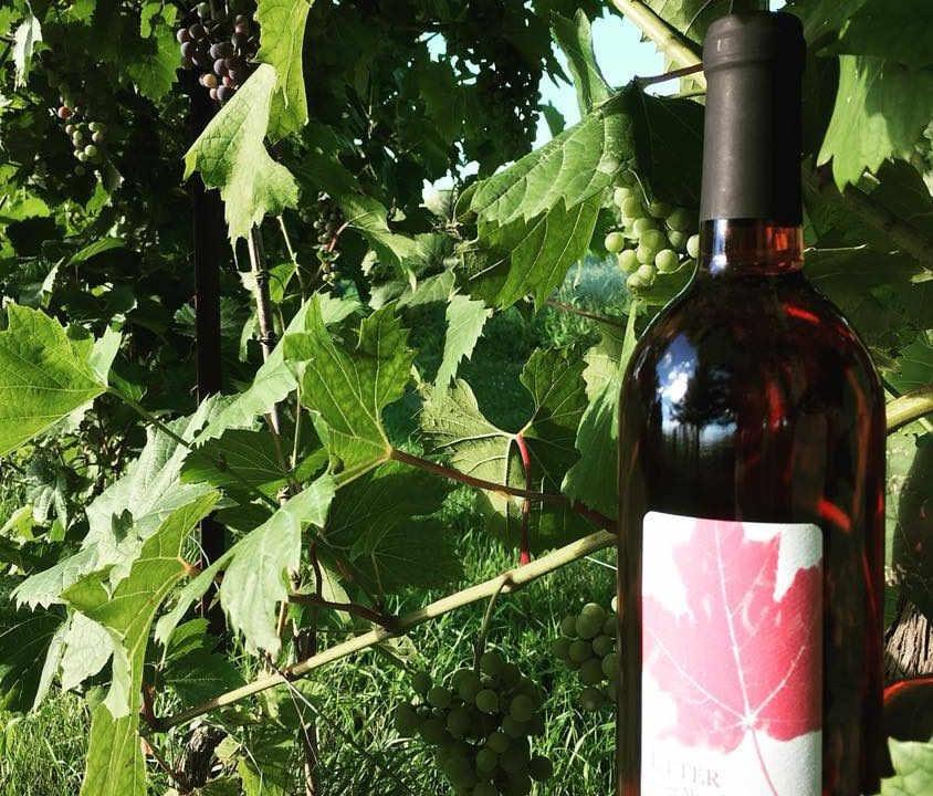 Vignoble bouteille de vin Vignoble Clos du Vully Navan Ontario Canada Ulocal produit local achat local