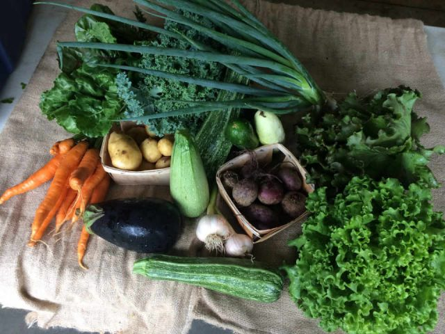Family Farmer CSA basket Waratah Downs Organic Farm Perth Ontario Canada Ulocal Local Product Local Purchase