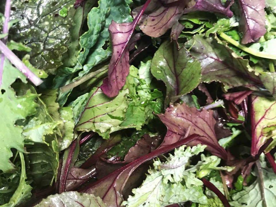 Marché de fruits et légumes légumes-feuilles Wild Oak Homestead Almonte Ontario Canada Ulocal produit local achat local