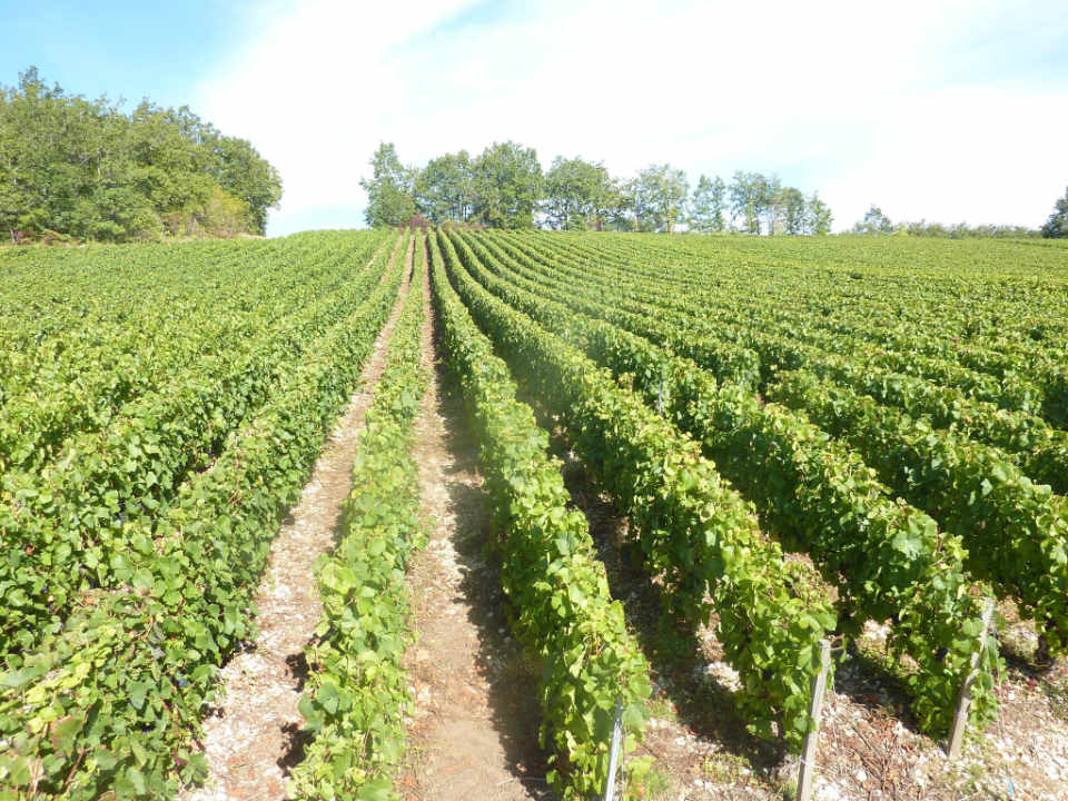 Champagne alcohol vineyard Champagne Boulachin Chaput Arrentières France Ulocal local product local purchase