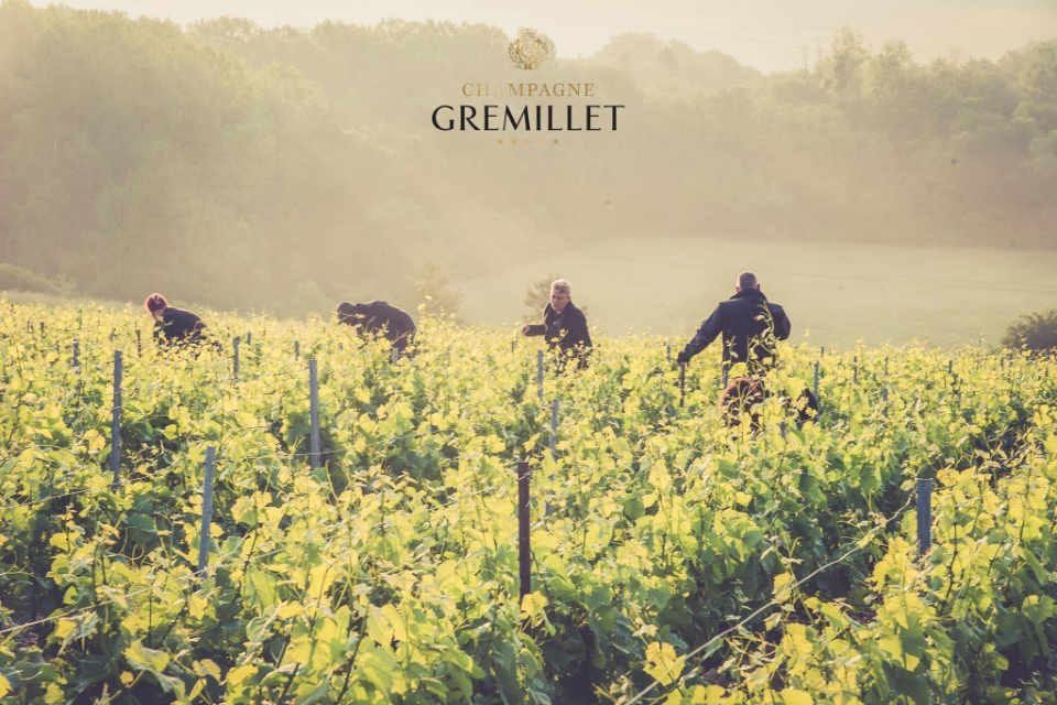 Vineyard alcohol Champagne Gremillet Balnot-sur-Laignes France Ulocal local product local purchase