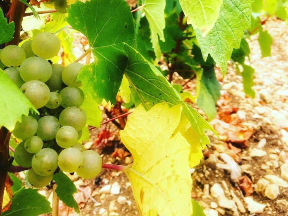 Vignoble alcool Champagne Jean Josselin & Fils Gyé-sur-Seine France Ulocal produit local achat local produit du terroir