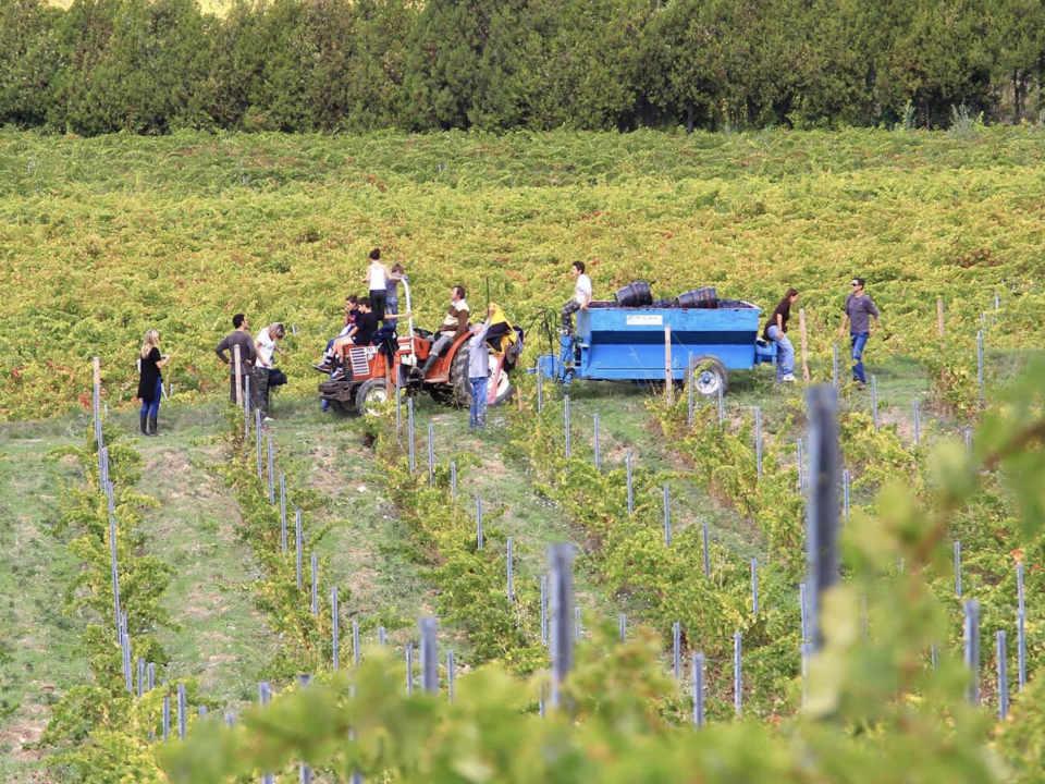 Vegan organic vineyards Château Barbanau Roquefort-la-Bédoule Provence-Alpes-Côte d'Azur France Ulocal local product local purchase local product
