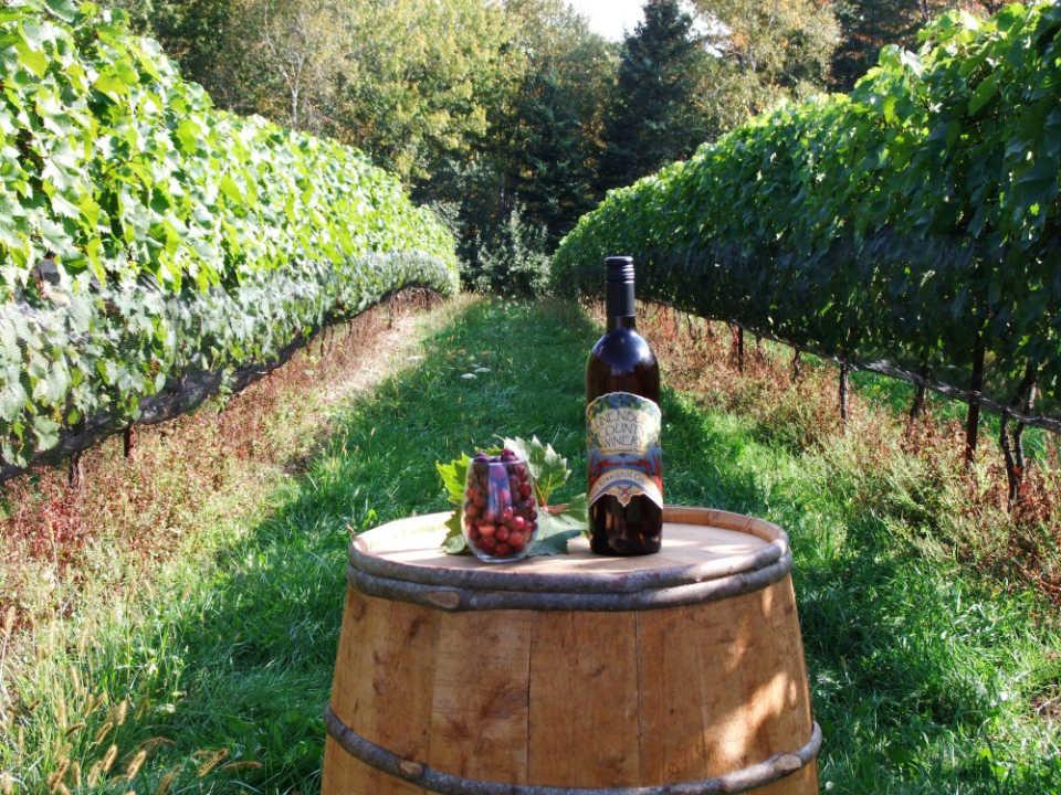 vignoble bleuet auto-cueillette dégustation vin blanc vin rouge vin rosé jardin ferme production locale lunenburg county winery mahone bay nouvelle-écosse canada ulocal produits locaux achat local produits du terroir locavore touriste