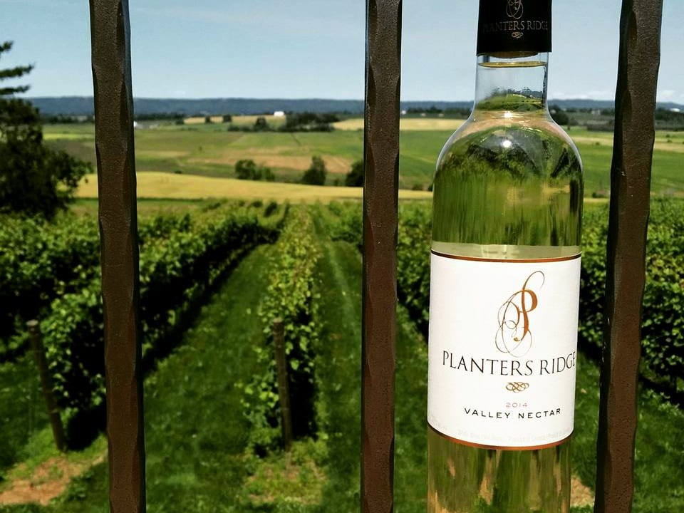 vineyard terrace food appetizer grapes white wine red wine speciality wine winemaking taste tradition passion bottle wine industry planters ridge winery Port Williams nova scotia canada ulocal local products local purchase local produce locavore tourist