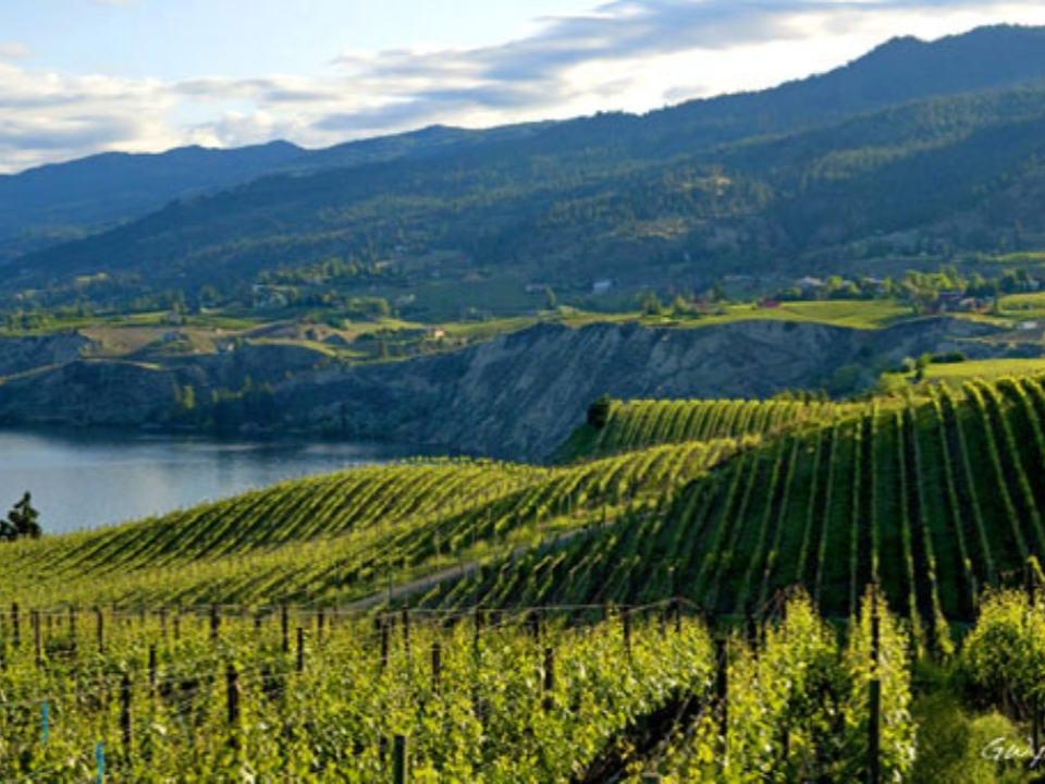 vignoble lac okanagan vue d'un vignoble township 7 vineyards and winery penticton colombie britannique canada ulocal produits locaux achat local produits du terroir locavore touriste