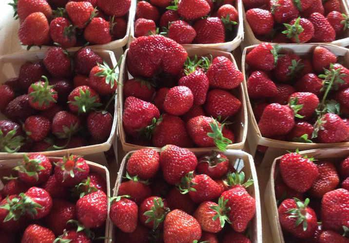 Autocueillette fraises framboises Walker's Strawberry Farm Lower Millstream NB Ulocal produit local achat local produit terroir