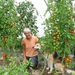 Marché de fruits et légumes biologiques Windy Hill Organic Farm McKees Mills NB Ulocal produit local achat local produit du terroir