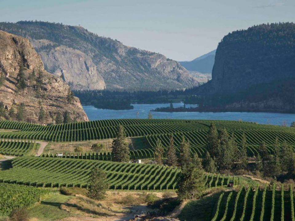 vineyard view of the vineyard with the lakeblue mountain vineyard and cellars okanagan falls british colombia canada ulocal local products local purchase local produce locavore tourist