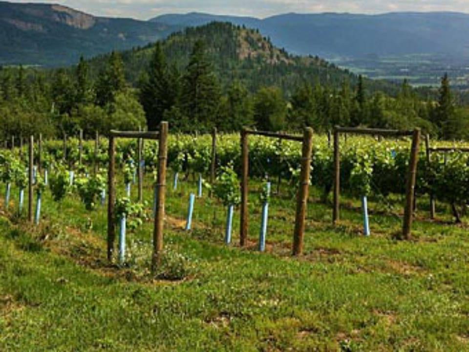 vignoble vue du vignoble et de la montagne edge of the earth vineyards armstrong colombie britannique canada ulocal produits locaux achat local produits du terroir locavore touriste